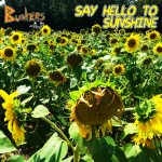 Say Hello To Sunshine - Single